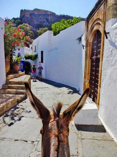 The head of my donkey