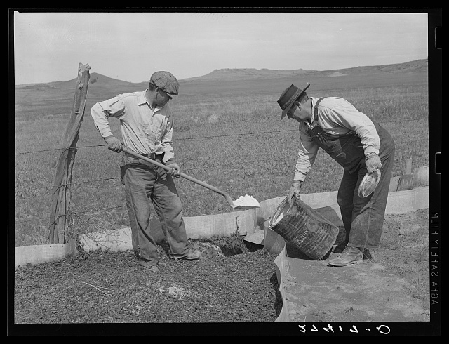 Placing poison in the cricket traps. Big Horn County, Montana.  1939 June.  (Photo: Arthur Rothstein)