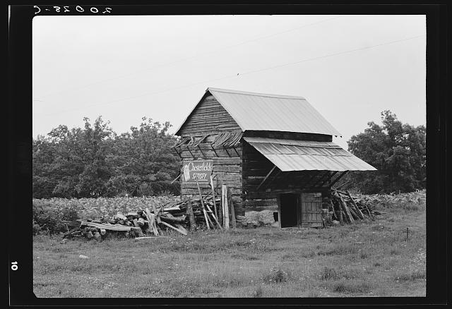 The tobacco barn, a distinctive American architectural form. Note tobacco growing in field behind barn. Person County, North Carolina.  1939 July.  Dorothea Lange, photographer. (Library of Congress)