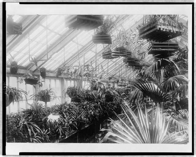 White House--Conservatory--Orchid house, 1903.