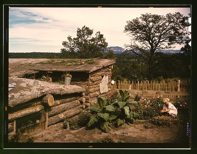 Garden adjacent to the dugout home of Jack Whinery, homesteader.  September 1940