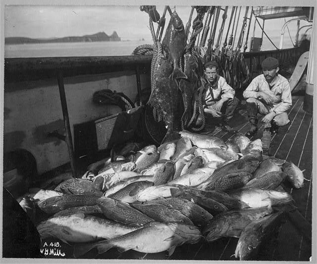 Fishing boat, cod and halibut, Alaska, before 1927
