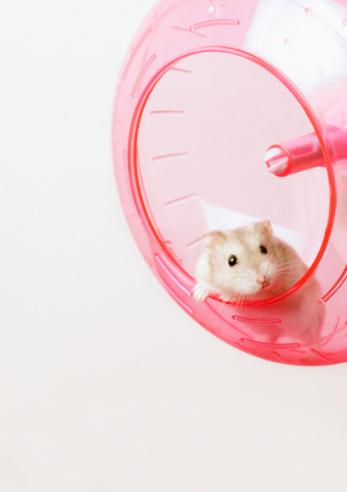 hamster_wheel.jpg