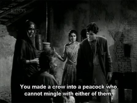 bks_peacock