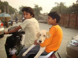 A dog on a bike
