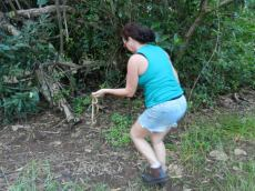 Releasing snake into the rain forest