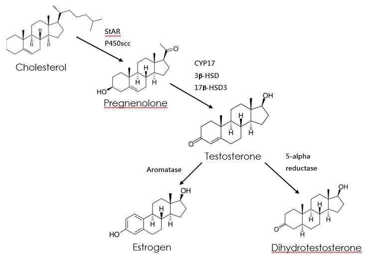 Steroidogenesis_NS