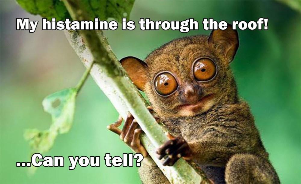 histamine_bush-baby-meme_MenElite