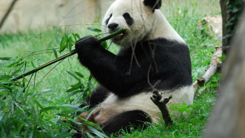 Bamboo shoots gut endotoxin dopamine MenElite