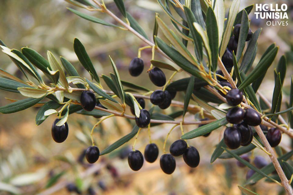 Tunisian Olive Oil International Sfax Meetings