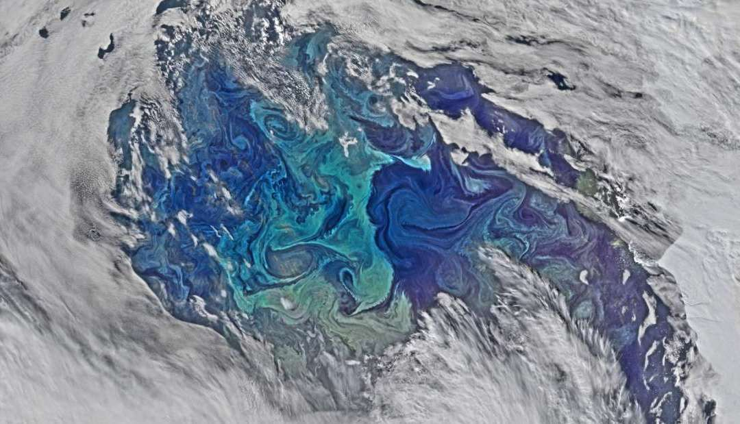 Earth's Oceans are Choking to Death