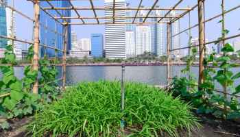 Three ways cities can help feed the world . . .