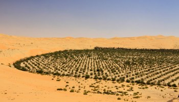 Saudi Arabia 'to plant 10 billion trees'