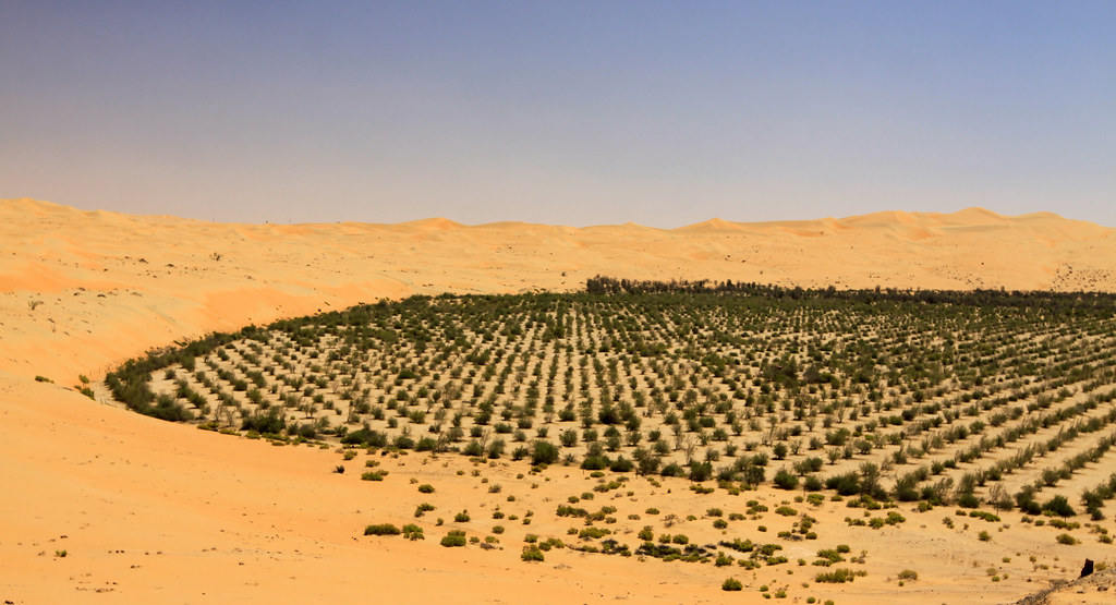 Saudi Arabia 'to plant 10 billion trees'