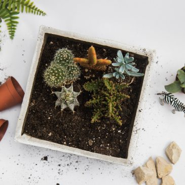 White background with green plants, small terra cotta pots, rocks, and plastic zebra animal scattered around. In the middle of the image is a white box planter with cactus and succulent plants. Mended Families is located in Saint Paul, MN and specializes in Pre-Blending Family Therapy.