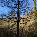 Blaise Dingle Walk in Bristol with Bristol Reiki Healing Arts Nature Mentoring