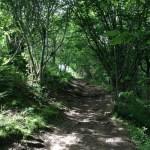 Mendips Mentoring in Nature with Bristol Reiki Healing Arts
