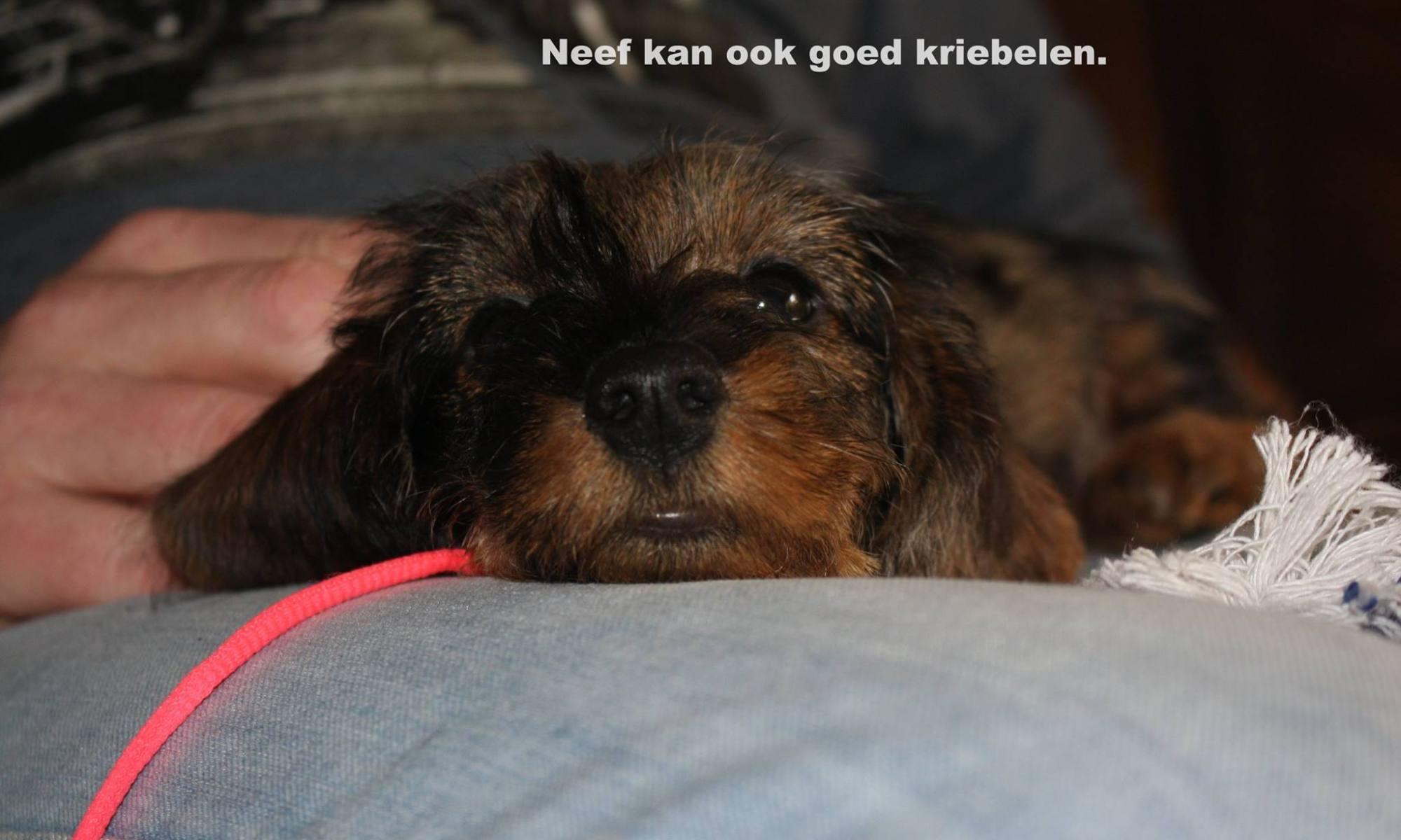 Kaatje Pagina 7 Meneertje Jansen
