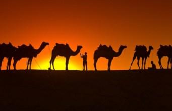 kamile ljudi