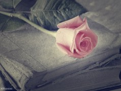 ruza, cvijet