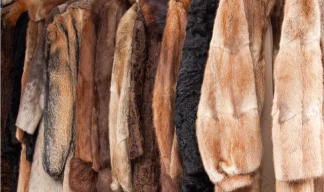 odjeca od kože
