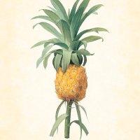Um macacão de ananases