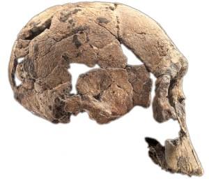 KNM-ER 1470. Homo rudolfensis. Fundet af Richard Leakey ved Turkana-søen i 1972.