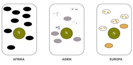 Forskelle i farve og form af melanosomer. Når en europæer udsættes for ultraviolet stråling ændres melanosomernes udseende i retning af det afrikanske mønster