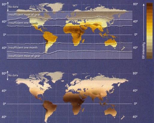 Øverst er angivet den periode i løbet af et år, hvor der er utilstrækkelig sollys til at sikre den nødvendige dannelse af vitamin D i huden. Nederst fordeling af hudfarven, hvis denne udelukkende var betinget af fordelingen af UV-indstråling