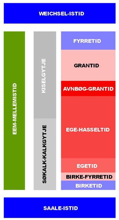 Inddeling af Eem-mellemistiden i Danmark baseret på pollenanalyser. Dådyrknoglerne tidsfæstes til avnbøg-grantiden.