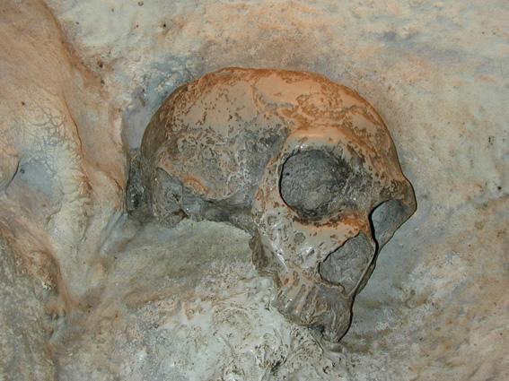 Gibraltar-kraniet