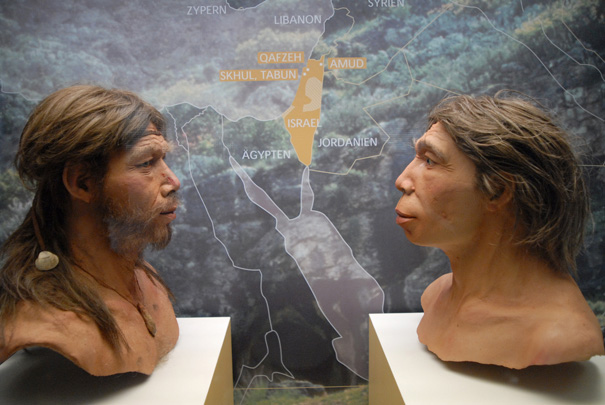 Profiler af Homo sapiens og Homo neanderthalensis