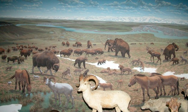 Beringia, Smithsonian Museum of Natural History, Washington D.C.