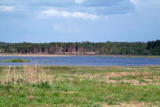 Den genetablerede Bølling sø sommeren 2005