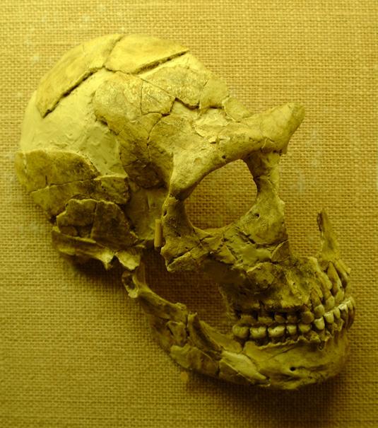 Kraniet fra St.-Césaire
