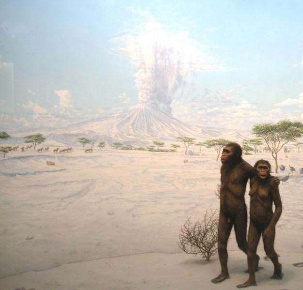 Laetoli, Diorama, American Museum of Natural History, New York City