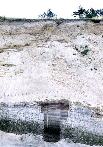 Profil i Hollerup Kiselgurgrav fra dengang hvor der endnu blev gravet kiselgur. Kun den øverste del af søaflejringerne (kiselgytjen) er synlige. Ovenover ses de ca. 10 m tykke smeltevandsaflejringer fra sidste istid (efter: Geologisk set - Det Mellemste Jylland).