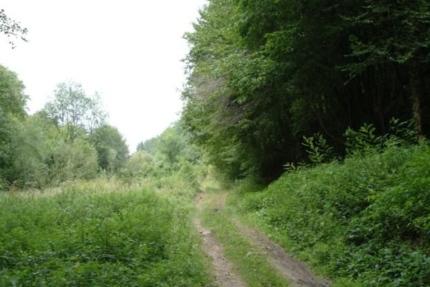 Skovvejen til Vindija-hulen