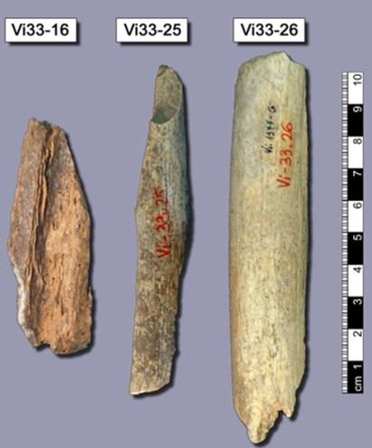 De tre neandertalknogler fra Vindija, hvor udvundet DNA blev anvendt til kortlægningen af neandertalernes arvemasse i 2010
