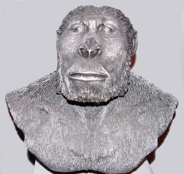 Robust australopithecin