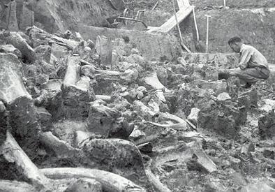 Mammutknoglelaget, Dolni Vestonice