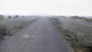 Vejen fra Konya til Catal Hüyük