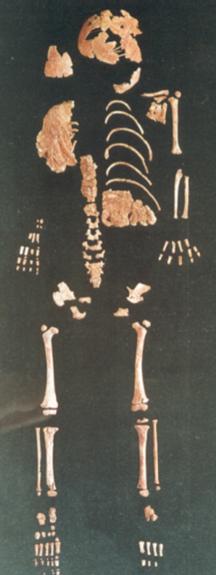 Lagar Velho skelettet