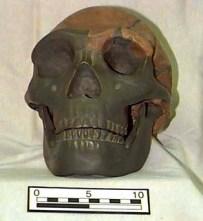Rekonstruktion af Ehringsdorf- neandertaleren