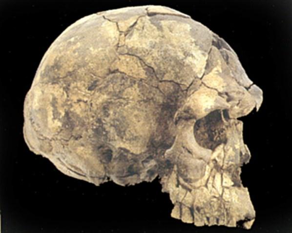 Tidlig Homo sapiens, Herto, Etiopien, 160.000 år