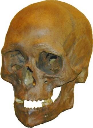 Kraniet af Koelbjegkvinden - det ældste, kendte danske skelet, godt 10.000 år gammelt