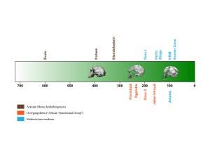 Udvikling af det moderne kranium