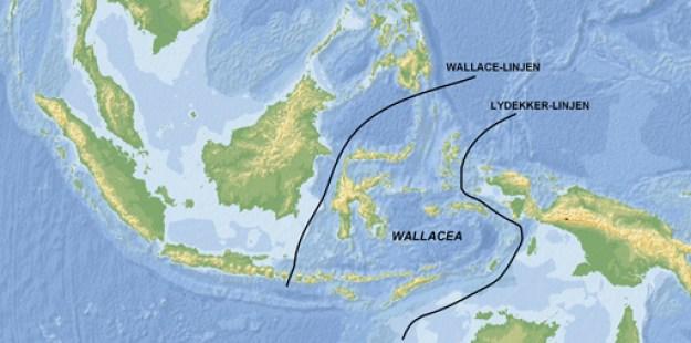 Wallacea afgrænses af Wallace-linjen mod vest og Lydekker-linjen mod øst