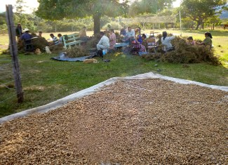 That's a lot of peanuts! The Mixcolajá church plans to sell them to cover church and Bible conference expenses.