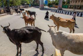India Imposes Nationwide Lockdown To Contain The Coronavirus Pandemic